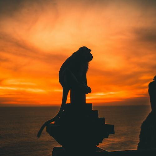 Cultura / Tiempo libre - La Calma. Bali - Inspirity